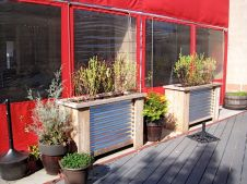 Planters outside Beer Run